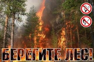 Более 200 приморцев оштрафовали за разведение костров в лесу