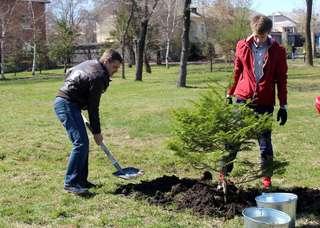 Аллея в парке имени А.К. Чумака пополнилась новыми деревьями