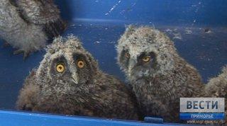 В зоопарке «Чудесный» под Уссурийском выхаживают шестерых осиротевших совят