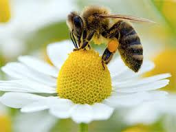 Жители Уссурийска пожаловались на покусавших их пчел