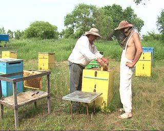 Появился первый в этом году мед