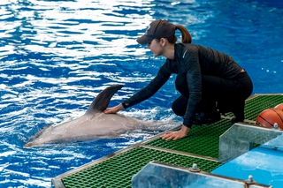Дельфинов в Приморском океанариуме намеренно отравили — Серков