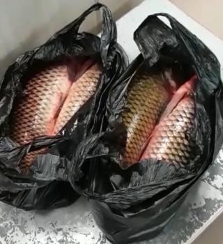 Более 94 кг рыбы пытались незаконно вывезти из России граждане КНР