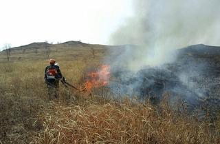 Десять лесных пожаров ликвидировали за сутки в Приморье