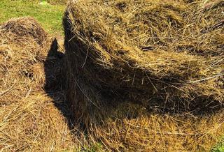 Мужчина погиб при заготовке сена в Приморье