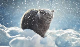 Снегопад и метель начнётся в пятницу в Приморье