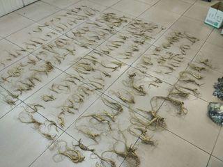 Уголовное дело возбудили уссурийские таможенники за контрабанду 2,5 кг корней женьшеня