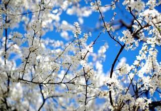 Синоптики рассказали какая погода будет в Уссурийске в апреле