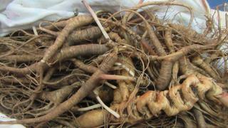 Сушеный трепанг, корни женьшеня и рог сайгака задержали уссурийские таможенники