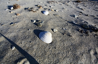 Семь пляжей Приморья добавились в список безопасных для отдыха