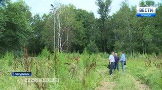 Столетний уссурийский парк превращается в лес
