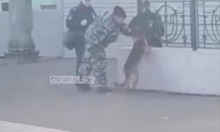 Полицейских Уссурийска привлекут за издевательство над служебной собакой