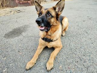 Завершена служебная проверка по факту грубого обращения со служебной собакой