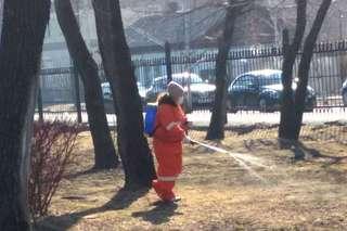 Сегодня Городской парк обработали от клещей