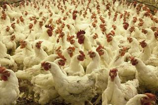 Уссурийская птицефабрика погасит все долги за 18 месяцев