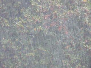 Съедобный «сюрприз» принес мощный ливень в центр города