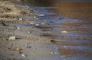 Еще восемь пляжей разрешены для купания в Приморье