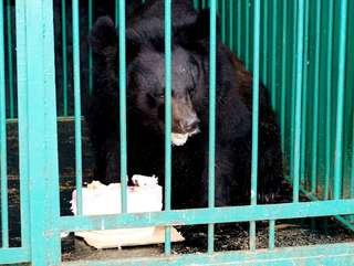 В зооэкспозиции городского парка Уссурийска медведь покалечил рабочего