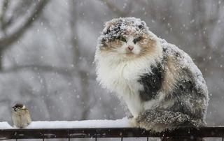 Снег в Уссурийске начнется ближе к вечеру