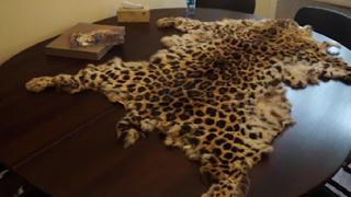 Перед судом предстанет житель Приморья, хранивший шкуру дальневосточного леопарда