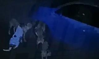 Машину погрызла стая собак-беспредельщиков