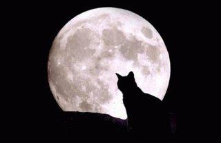 На что могут воздействовать лунные фазы