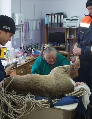 В Приморье лесного жителя спасли от бродячих собак