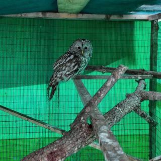 Хищная птица врезалась в окно школы в Приморье