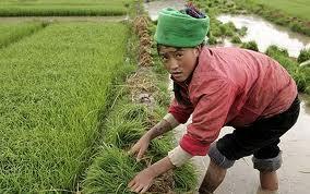 В Приморье китайские овощеводы продолжают портить сельскохозяйственные земли