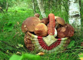 В Уссурийске нашли заблудившегося в лесу грибника