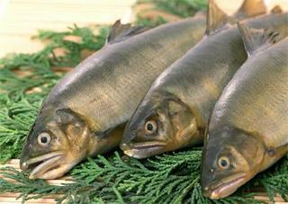 Импортную рыбу в Приморье продолжают проверять на радиацию