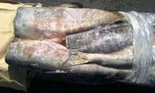 Опасная рыба пошла на корм животным