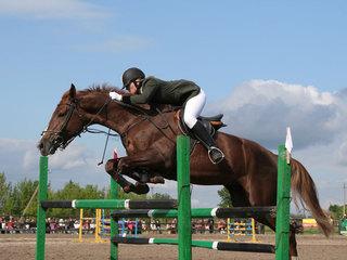 Уссурийские спортсмены приняли участие в первенстве по конному спорту