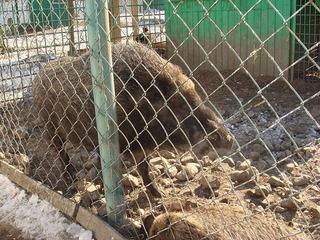 Сотрудники уссурийского зоопарка начали голодовку